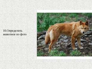 10.Определить животное по фото
