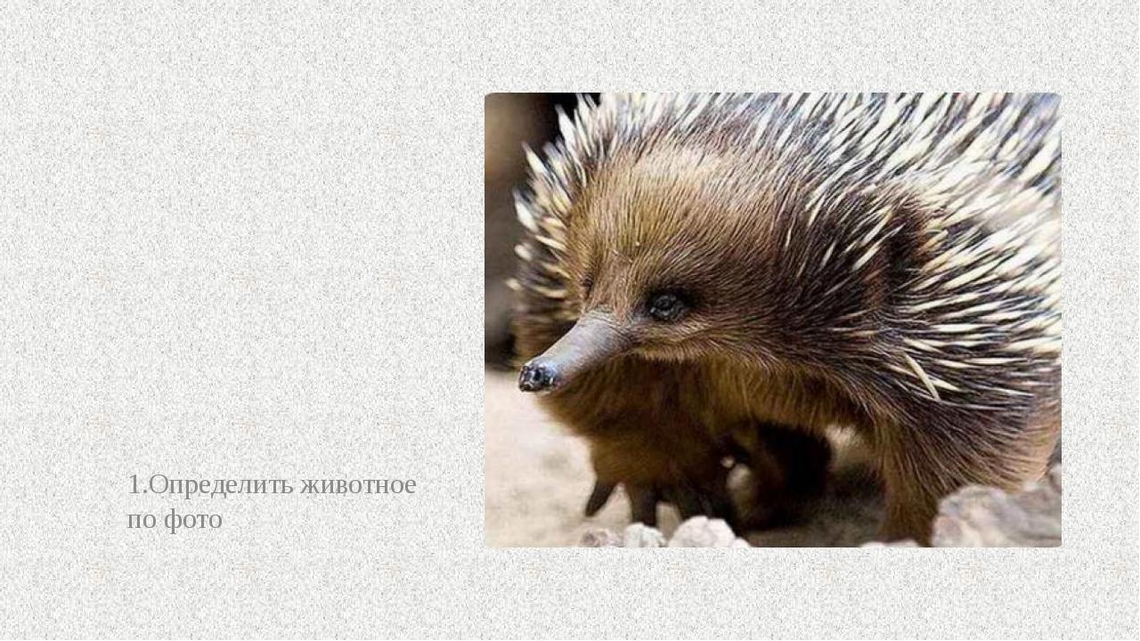 1.Определить животное по фото