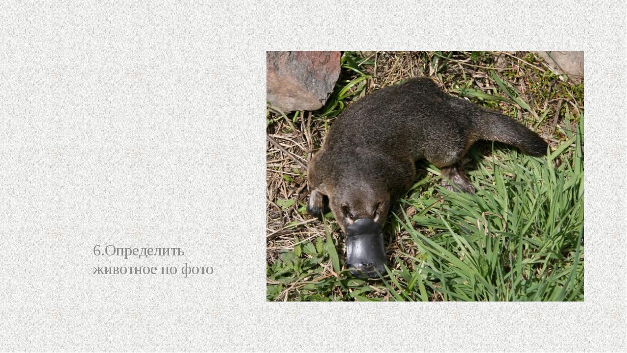 6.Определить животное по фото