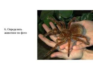 6. Определить животное по фото