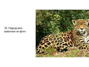 10. Определить животное по фото