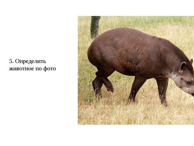 5. Определить животное по фото