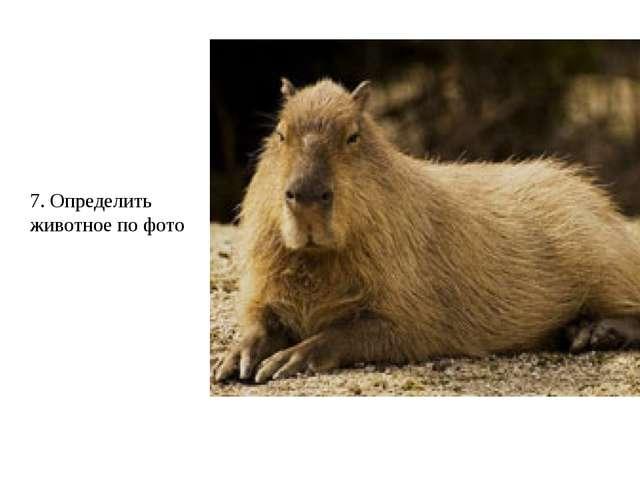7. Определить животное по фото
