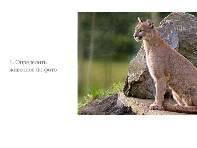 1. Определить животное по фото