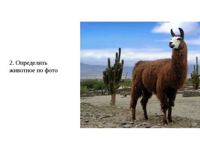 2. Определить животное по фото