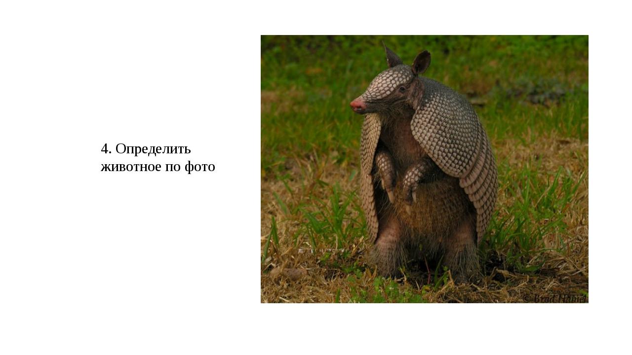 4. Определить животное по фото