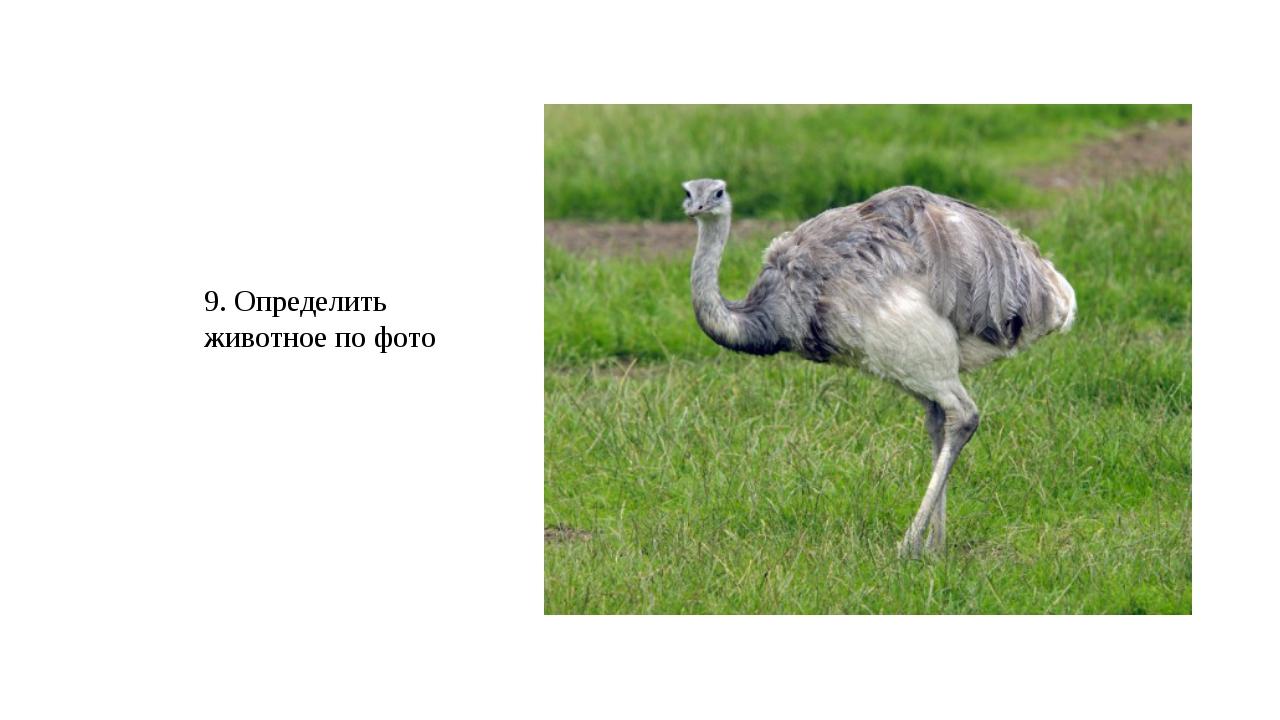 9. Определить животное по фото