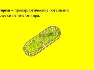 Бактерии – прокариотические организмы. Их клетки не имеют ядра.