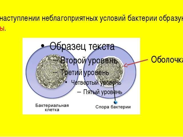 При наступлении неблагоприятных условий бактерии образуют споры. Оболочка