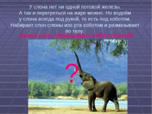 У слона нет ни одной потовой железы. А так и перегреться на жаре можно. Но во