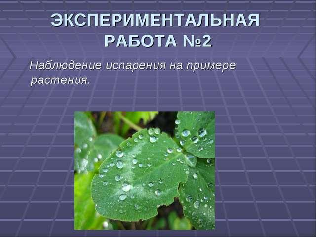 ЭКСПЕРИМЕНТАЛЬНАЯ РАБОТА №2 Наблюдение испарения на примере растения.