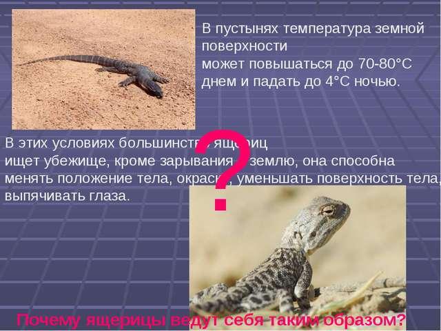В пустынях температура земной поверхности может повышаться до 70-80°С днем и...