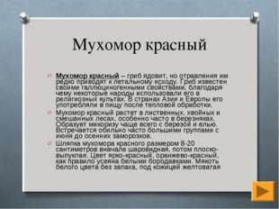 Мухомор красный Мухомор красный – гриб ядовит, но отравления им редко приводя