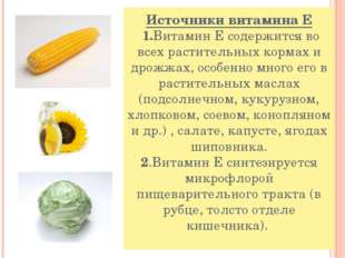 Источники витамина Е 1.Витамин Е содержится во всех растительных кормах и дро