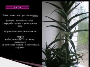 Всем известное растение алоэ, помимо лечебного сока перерабатывает и уничтожа