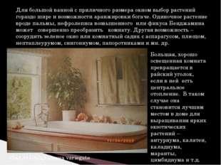 Для большой ванной с приличного размера окном выбор растений гораздо шире и в