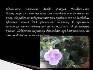 Одиночное растение вроде фикуса Бенджамина великолепно, но только если для не