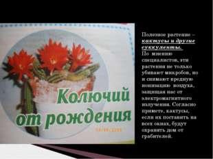 Полезное растение – кактусы и другие суккуленты. По мнению специалистов, эти