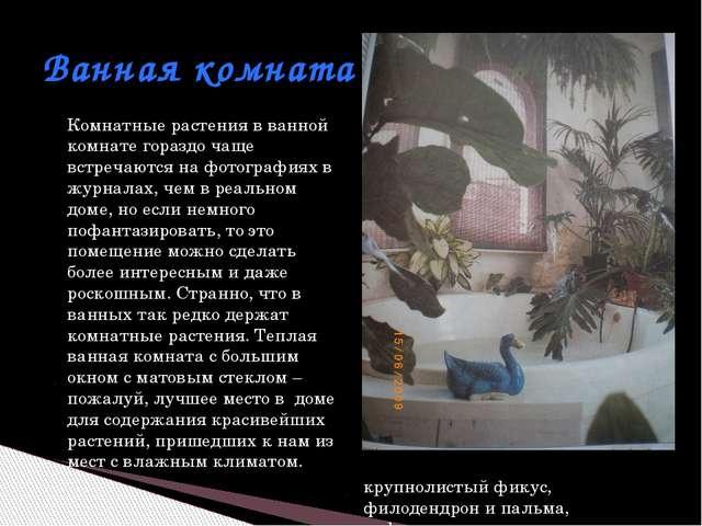 Комнатные растения в ванной комнате гораздо чаще встречаются на фотографиях в...
