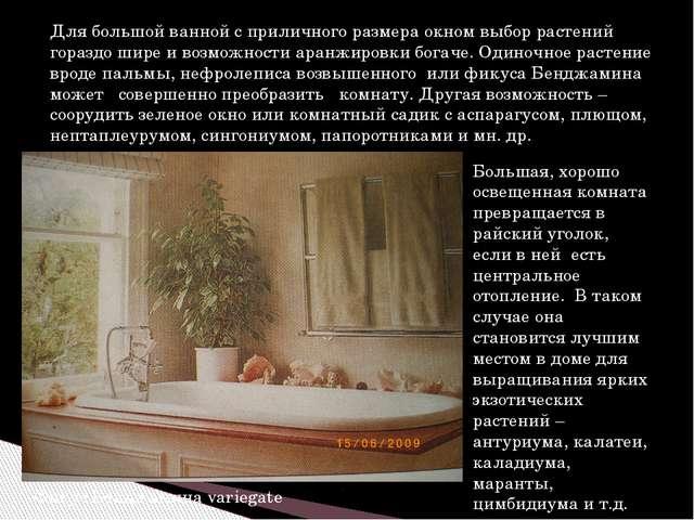 Для большой ванной с приличного размера окном выбор растений гораздо шире и в...