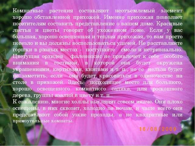 Комнатные растения составляют неотъемлемый элемент хорошо обставленной прихож...