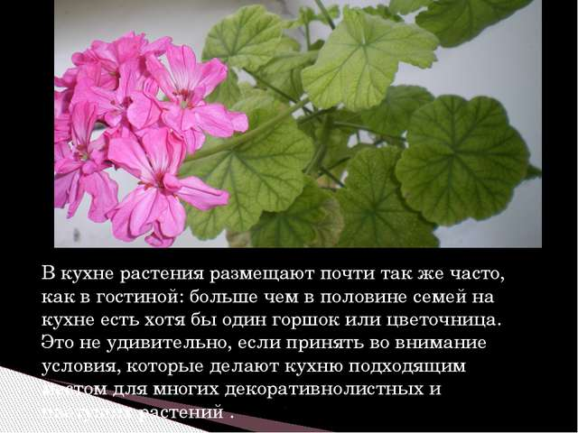 В кухне растения размещают почти так же часто, как в гостиной: больше чем в п...