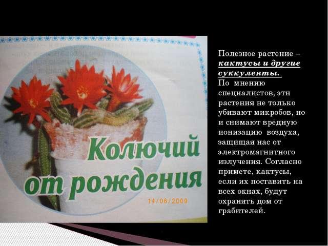 Полезное растение – кактусы и другие суккуленты. По мнению специалистов, эти...