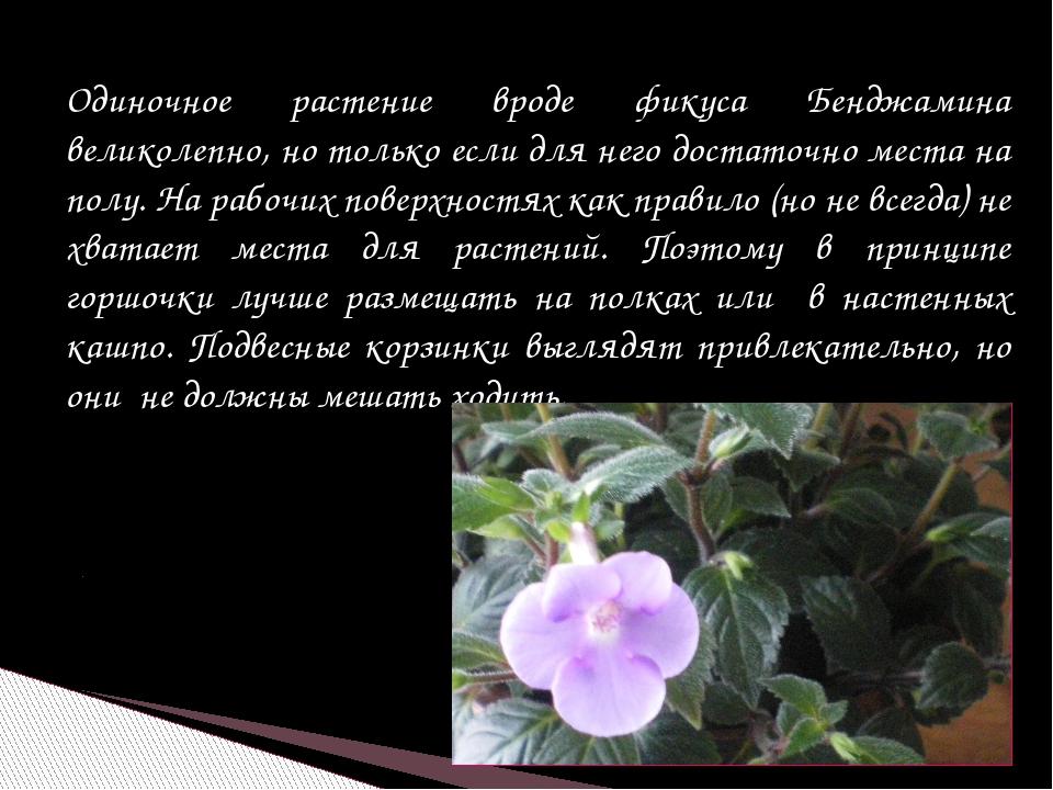 Одиночное растение вроде фикуса Бенджамина великолепно, но только если для не...