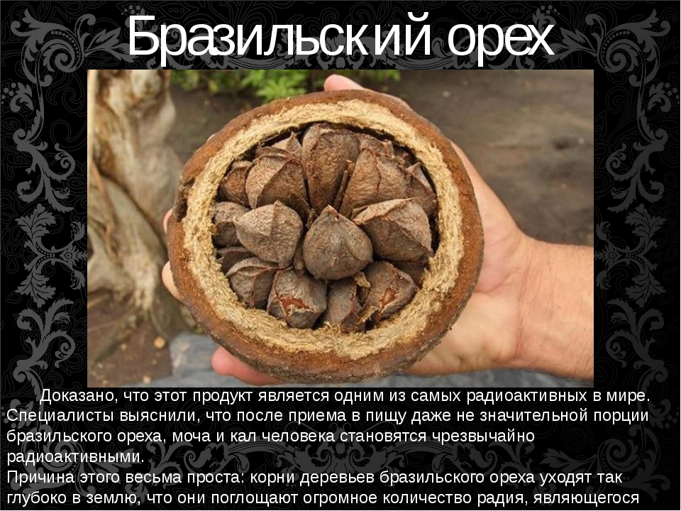 Бразильский орех Доказано, что этот продукт является одним из самых радиоакти...