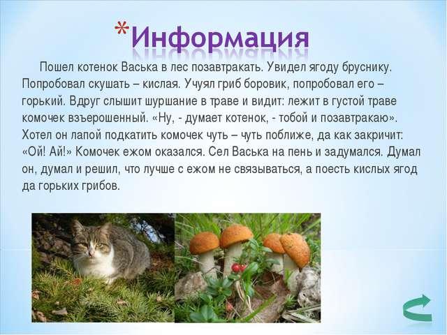 Пошел котенок Васька в лес позавтракать. Увидел ягоду бруснику. Попробовал ск...