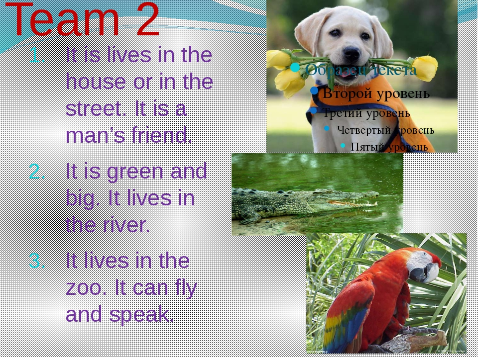 It is lives in the house or in the street. It is a man's friend. It is green...