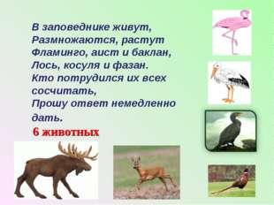 В заповеднике живут, Размножаются, растут Фламинго, аист и баклан, Лось, косу