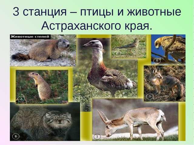 3 станция – птицы и животные Астраханского края.