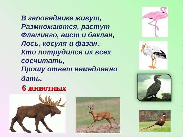 В заповеднике живут, Размножаются, растут Фламинго, аист и баклан, Лось, косу...