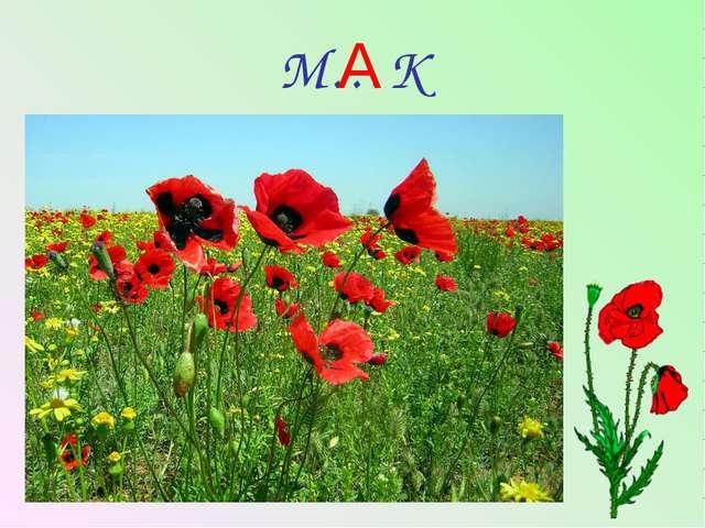 М…К А