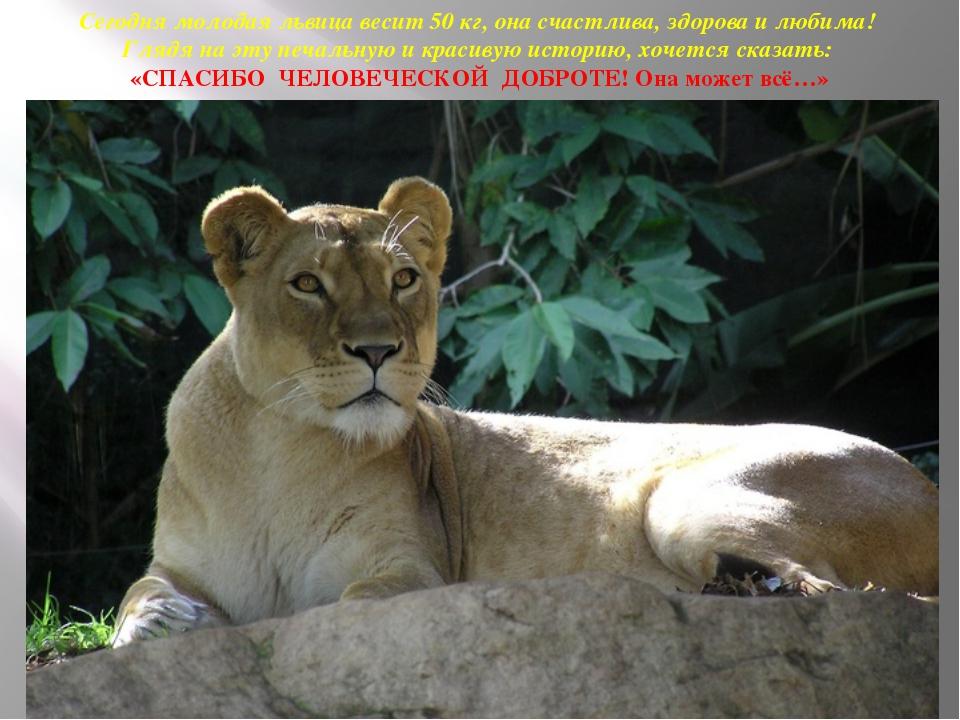 Сегодня молодая львица весит 50 кг, она счастлива, здорова и любима! Глядя на...