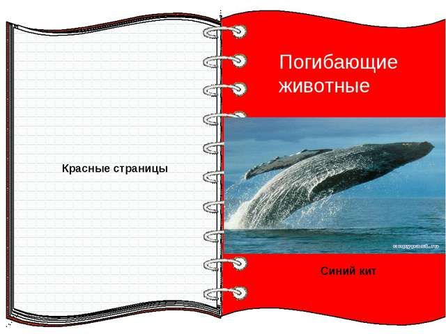 Красные страницы Погибающие животные Синий кит