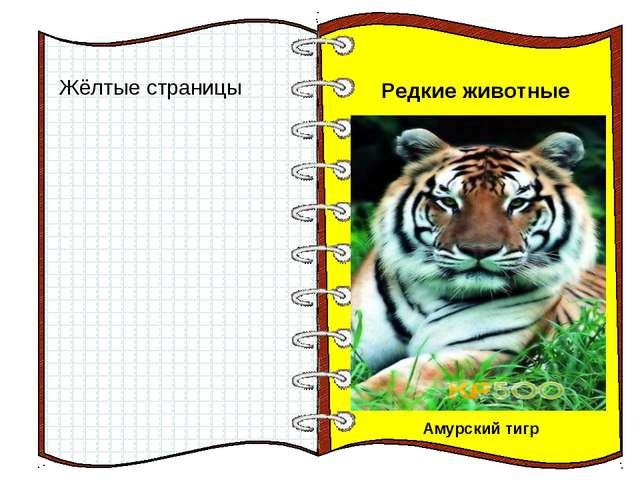 Жёлтые страницы Редкие животные Амурский тигр