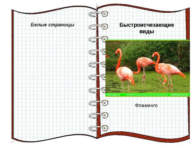 Белые страницы Быстроисчезающие виды Фламинго