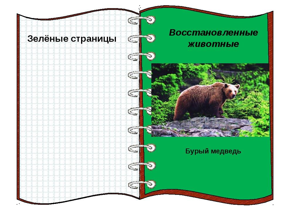 Зелёные страницы Восстановленные животные Бурый медведь