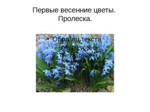 Первые весенние цветы. Пролеска.