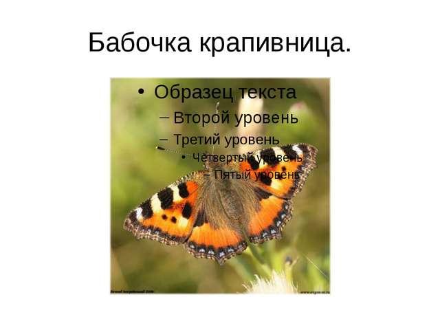 Бабочка крапивница.