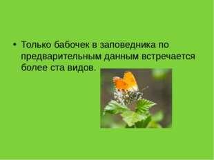 Только бабочек в заповедника по предварительным данным встречается более ста