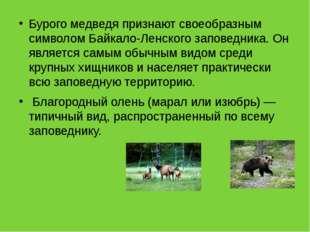 Бурого медведя признают своеобразным символом Байкало-Ленского заповедника. О