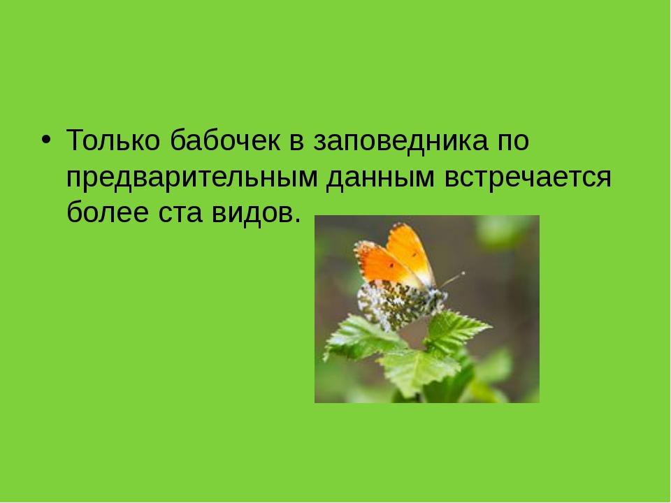 Только бабочек в заповедника по предварительным данным встречается более ста...