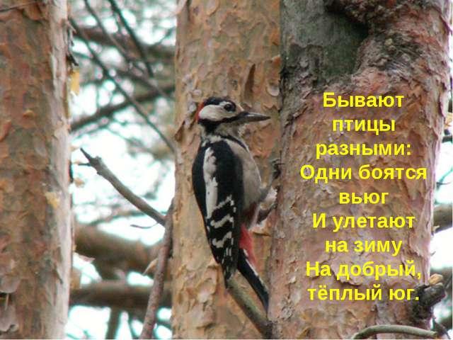 Бывают птицы разными: Одни боятся вьюг И улетают на зиму На добрый, тёплый юг.
