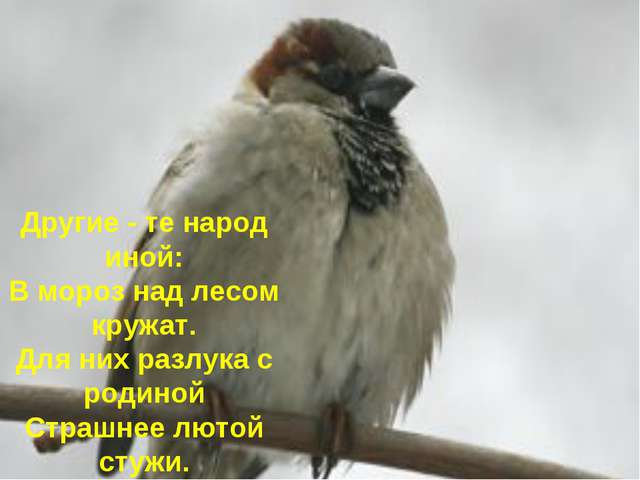 Другие - те народ иной: В мороз над лесом кружат. Для них разлука с родиной С...