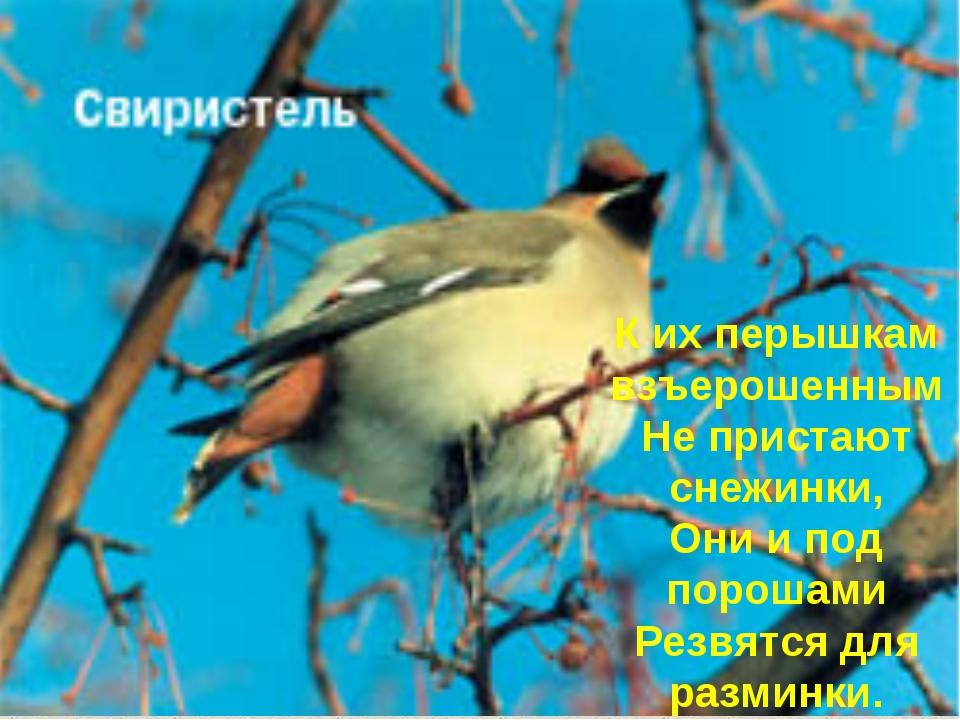 К их перышкам взъерошенным Не пристают снежинки, Они и под порошами Резвятся...