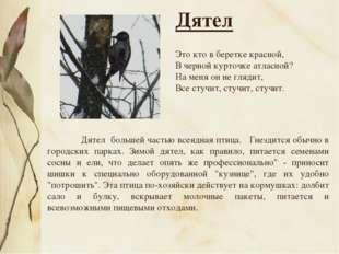 Дятел большей частью всеядная птица. Гнездится обычно в городских парках. Зи
