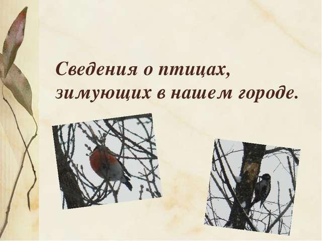 Сведения о птицах, зимующих в нашем городе.